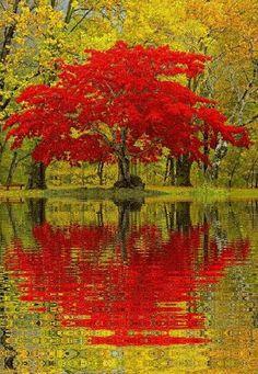 Riflessi di autunno