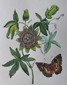 Пассифлора и бабочка. Акварель.41Х31 см.