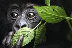 Scientists debate whether exploiting resources in the rainforest helps diseases leap from animals to humans.