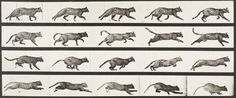 Eadweard Muybridge | Cat trotting, changing to a gallop (Animal Locomotion, 1887, plate 717) | USC Libraries | Discover and Shop Museum Art Prints | 1000Museums