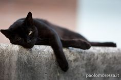 relax by Paolo Moressa on 500px