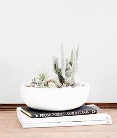 spikey blooms on books