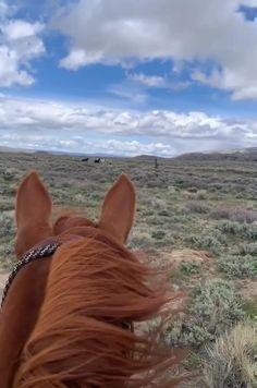Cute Horses, Pretty Horses, Horse Love, Cowboy Horse, Horse Girl, Horse Photos, Horse Pictures, Most Beautiful Horses, Animals Beautiful