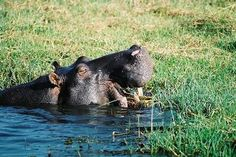 8 Day Chobe & the Okavango Delta - Rate: Available on request