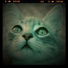 Lorenzo...the St.Pat's cat