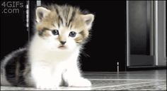 This kitten is trying to talk to you. | Community Post: 31 Kittens That Think They Can, But Can't