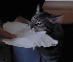 Cat Literally Ate My Homework (gif)