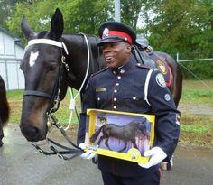 Police horse overcomes trauma, snags glory