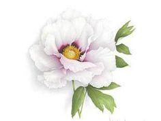 «Искусство ботанической живописи»
