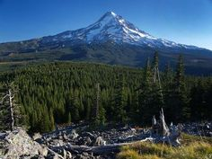 Perry Lake from Vista Ridge Hike - 6.5 miles. Mount Hood dominates the view from Owl Point (Tom Kloster)