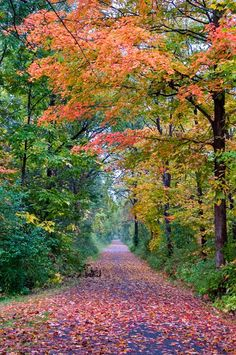 Country road (Ithaca, New York) by Alexey Sergeev cr. Landscape Photography, Nature Photography, Scenic Photography, Beautiful World, Beautiful Places, Flor Magnolia, Beau Site, Autumn Scenery, Country Landscaping