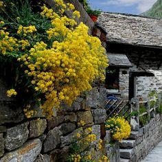Canton Ticino / Switzerland