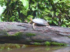 """Schildkröte am """"Platz, an den die Schildkröten kommen"""" (""""tortuga"""" ist im Spanischen die Schildkröte)"""
