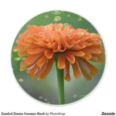 Zazzled Zinnia Ceramic Knob