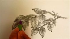 How To Draw: Leaves