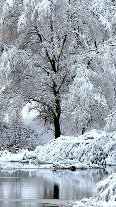 beautiful tree in winter Winter Szenen, I Love Winter, Winter Magic, Winter Time, Winter Christmas, Christmas Scenery, I Love Snow, Snow Pictures, Snow Photography