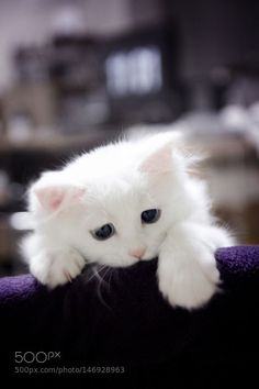 this is the saddest looking cat. Someone pet him and give him a ball of yarn.