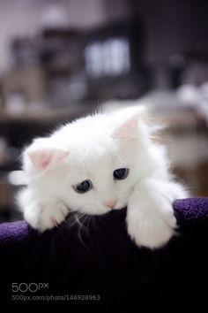 Cutie face