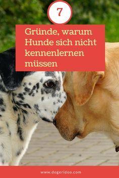7 Gründe, warum Hunde sich nicht kennenlernen müssen