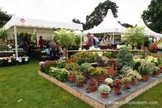 The RHS Wisley Flower Show was opened by actress Dame Penelope Keith, on Tuesday September This lovely flower show runs until Sunday September so you still have time to plan your visit. There's free entry to the RHS Wisley Flower Show… Buy Plants, Garden Show, Drought Tolerant Plants, Flower Show, Great Places, Gardens, Nursery, Table Decorations, Flowers