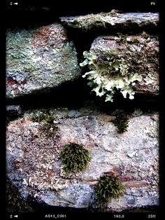 lichenstone.