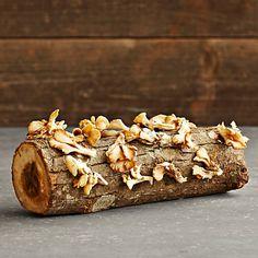 Oyster mushroom cultivation log!