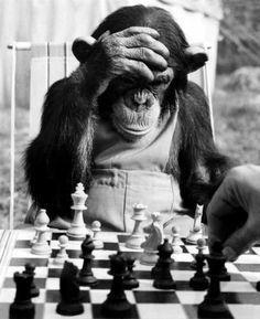 Обезьяна и шахматы