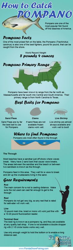 Learn how to catch Pompano with this infographic!