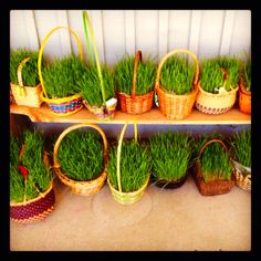 Love the real grass!!!!!!! Easter at Marin Waldorf School