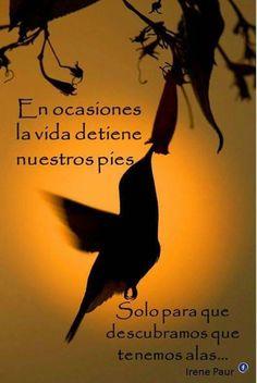 """""""Aun a la espera de que las alas que encuentre, puedan volar"""". A-Mirai"""
