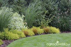 Zimozielony ogród przy białym domu - strona 227 - Forum ogrodnicze - Ogrodowisko