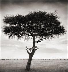 Las mejores fotografías de la África salvaje | OLDSKULL