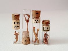 Animal Bones in Vintage Glass Vials Specimen by PULPmiscellania