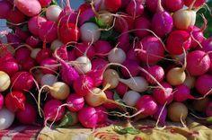 More radishes from Moraine View Farm near Hoopeston, IL