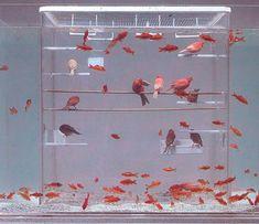 fish-bird tank