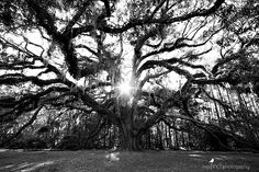 Lichgate Park | Tallahassee, FL | Photography by Inga Finch Photography