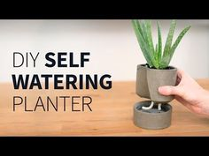 Self Watering Concrete Planter: 6 Steps (with Pictures)