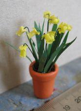 Daffodil tutorial in French
