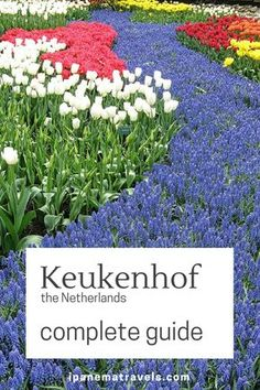 Complete travel guide to Keukenhof (Lisse), the Netherlands: reasons to visit, piratical tips and advice, background information about tulips and the tulip mania #Keukenhof #Lisse, #Netherlands #tulips #tulipgarden via @ipanemat