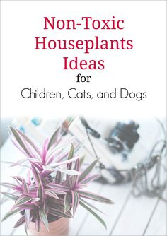 Non-Toxic House Plants For Children, Cats, and Dogs