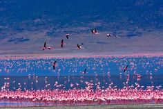Lago Nakuru (lago dei fenicotteri) - Kenya