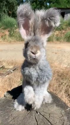 Lapin moelleux Fluffy Bunny Tiere - New Ideas Cute Little Animals, Cute Funny Animals, Cute Cats, Otters Funny, Adorable Baby Animals, Cute Baby Sloths, Funny Owls, Cute Babies, Cute Animal Videos