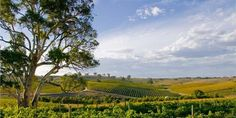 Mountadam Winery is the highest point in South Australia making beautiful cool climate wines.