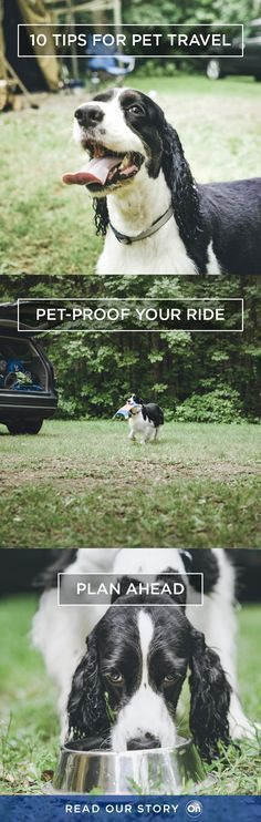 10 Tail-Wagging Pet Travel Tips