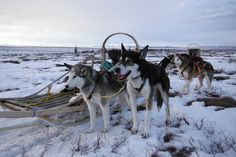 Try dog sledding at Denali National Park and Preserve | 17 unique things to do at our national parks via Wilderness.org