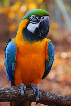 Macaw! Macaw!