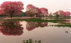El Pantanal Paraguayo Fuente: ABC