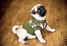 Pugs + Dogs + Cute!  #LittleBearProd