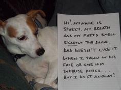 Shamed Dog   Funny Dog Shaming Pictures - Page 6