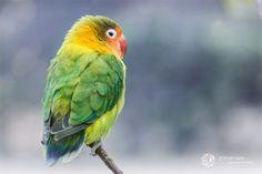 Love Bird by Jérémy May on 500px
